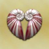 Heart shell Royalty Free Stock Photos