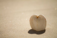 Heart  shell Stock Photography