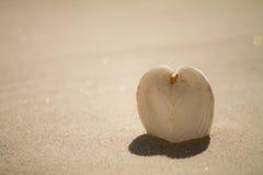 Heart shell stock photography