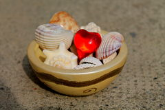 Heart and shells. A heart between the shells Royalty Free Stock Photo