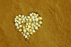 Heart from shells Royalty Free Stock Image