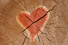 Heart sign. On the tree royalty free stock photography