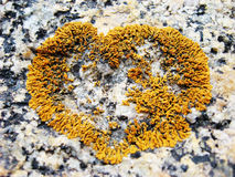 Heart sign. Natural heart symbol made on stone Stock Photos