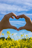 Heart sign Royalty Free Stock Photo