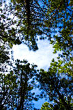 Heart in the sky. The Heart in the sky through the trees Royalty Free Stock Image