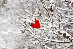 Heart on snow-covered bush Stock Image