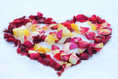 Heart on the snow. Dotted with  rose petals Stock Photos