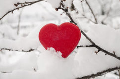 Heart in the snow. One red heart  in the snow on the branch Stock Photography