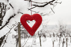 Heart in the snow. Red heart in the snow on the branch Royalty Free Stock Images