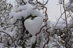 Heart of snow in the willow. The picture shows a heart of snow in the willow royalty free stock images