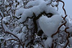 Heart of snow in the willow. The picture shows a heart of snow in the willow royalty free stock photos