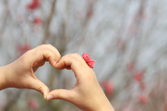 Heart in spring Royalty Free Stock Photos