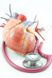 Heart and stethoscope. Heart human model and stethoscope stock photo