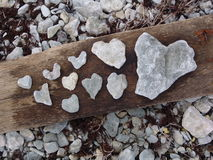 Heart of stone. Heart-shaped limestone findings on a piece of drift-wood. Gotland, Sweden Stock Photos
