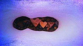 Heart Stones. Haert shape rocks through the snow Stock Image