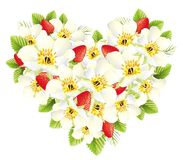 Heart from strawberries and flowers. Heart strawberry flower fruit  berry leaf love Royalty Free Stock Images