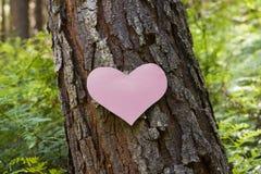Heart stuck to a pine tree Royalty Free Stock Photo
