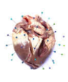 Heart suffering Royalty Free Stock Image