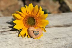 Heart and sunflower Stock Photography