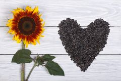 The heart of sunflower seeds and flower on a wooden Royalty Free Stock Image