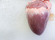 Heart surgeryPork heart. stock photography