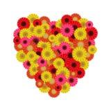 Heart symbol of gerberas Stock Photos
