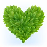 Heart symbol in green leaves Stock Image