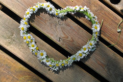 Heart symbol made of daisies. A heart made of daisies royalty free stock photo
