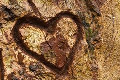 Heart on tree Royalty Free Stock Photography