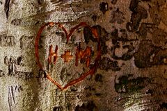 Heart on a Tree. Love heart carved on a broadleaved tree Stock Photos