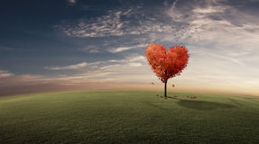Heart Tree Stock Images