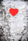 Heart on tree. Wooden heart on white tree Royalty Free Stock Images