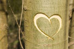 Heart in tree Royalty Free Stock Photography