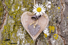 Heart on tree bark Stock Photo