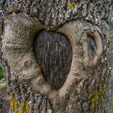 Heart tree Stock Image