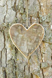 Heart on tree Stock Photos