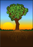Heart_tree_color Stock Image