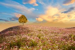 Heart tree on Cosmos mountain, abstract backgrounds