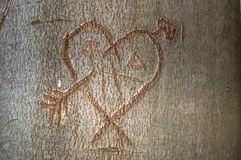 A heart in a tree. A heart cut in a tree trunk Stock Photo