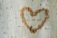 Heart in a tree Stock Photography