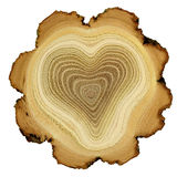 Heart of tree - growth rings of acacia tree - cros Stock Image