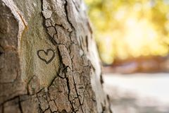 A heart in a tree royalty free stock image