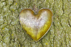 Heart on tree Stock Images