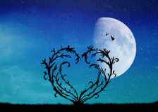 Heart tree in the moonlight Stock Photos