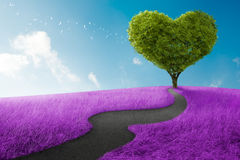 Heart tree. Heart shape tree in lavender meadow for love symbol Stock Photography