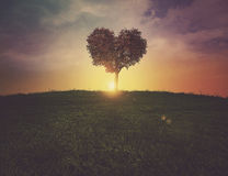 Heart tree sunset Royalty Free Stock Photos