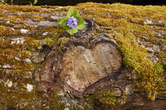 Heart in tree trunk Stock Photos