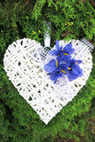 Heart on a tree. White heart hanging on coniferous trees Royalty Free Stock Photography