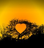 Heart in tree Stock Image