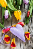Heart with tulips Stock Images